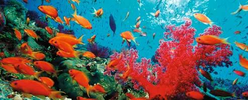 Egipt Morze Czerwone