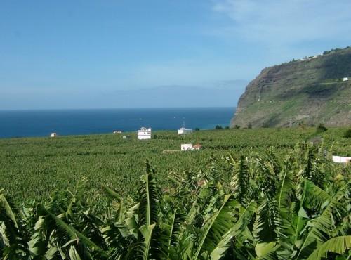 Ogromne pola bananów - siła gospodarki wyspy