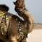Wielbłądzie fryzury – chodzące dzieła sztuki