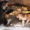 Matecznik jaskiniowych zwierząt – Jaskinia Niedźwiedzia
