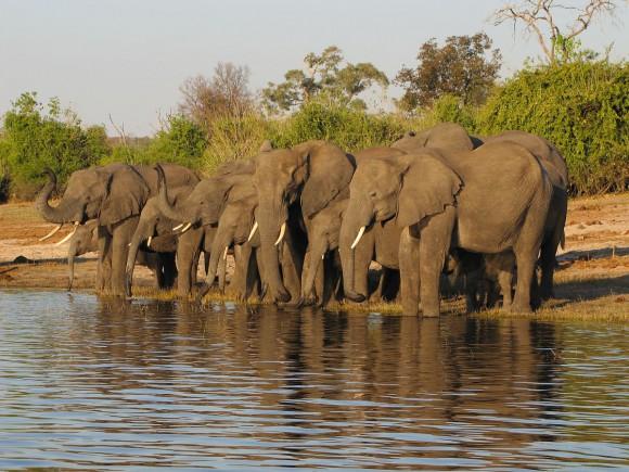 slonie-safari