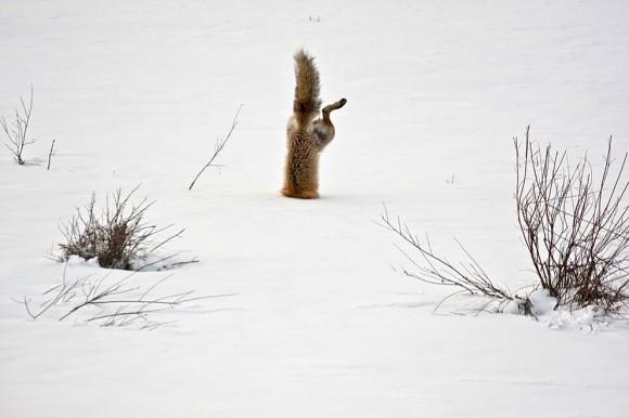 A tutaj przezabawne wyróżnienie w kategorii Natura :) Autor:  Micheal Eastman
