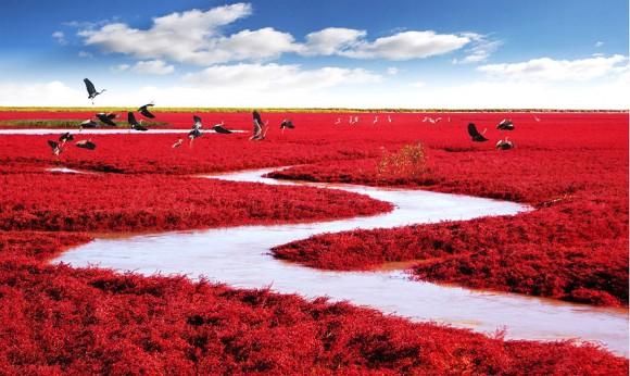 Czerwona Plaża - Panjin, Chiny