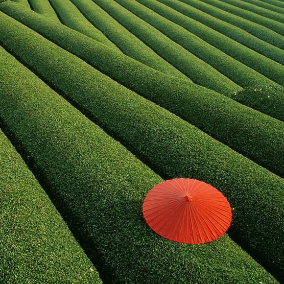 Herbaciane Pola - Chiny