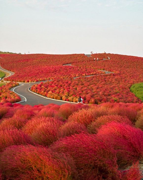 Hitachi Seaside Park - Japonia