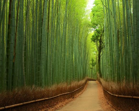 Las Bambusowy - Japonia
